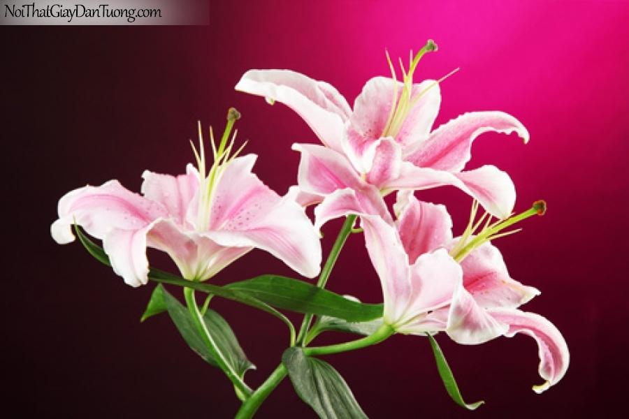 Tranh dán tường | Bức tranh vẻ đẹp độc đáo của bông hoa lan DA2246
