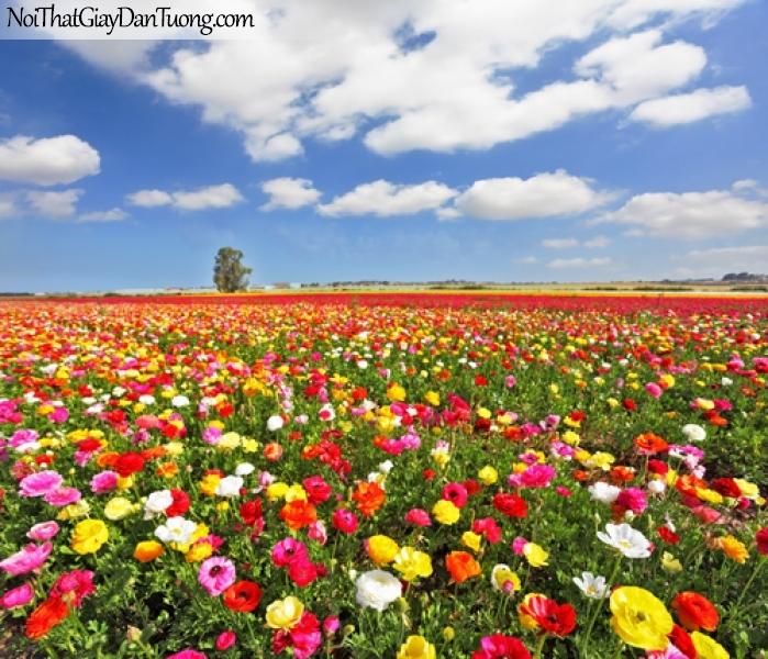 Tranh dán tường   Bức tranh cánh đồng hoa dưới bầu trời xanh DA2252