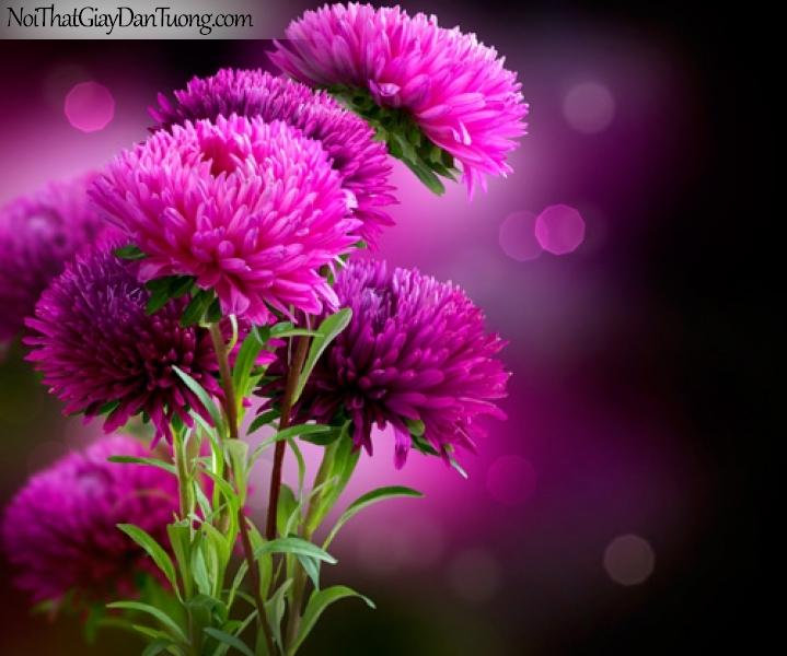 Tranh dán tường | Bức tranh những bông hoa đang khoe sắc DA2251