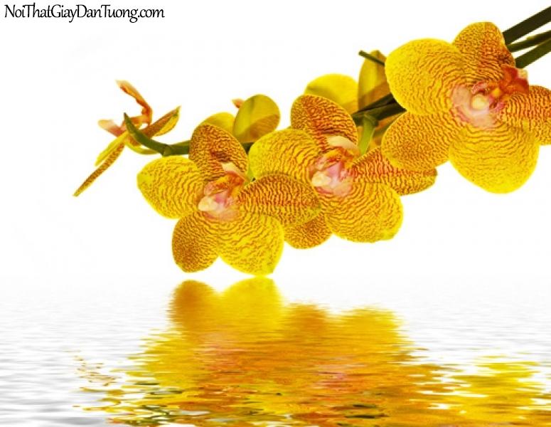 Tranh dán tường | Bức tranh những bông hoa lan đang khoe sắc trên mặt nước DA2256