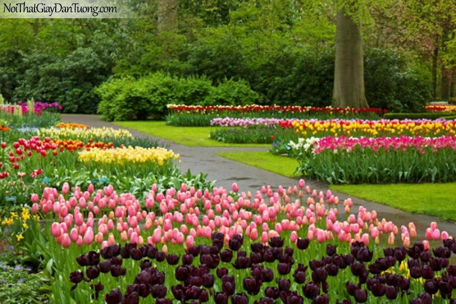 Tranh dán tường | bức tranh những bông hoa tuy líp đẹp đang khoe sắc bên cạnh con đường trong khu rừng DA2271