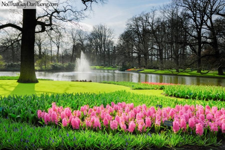 Tranh dán tường | những bông hoa đang khoe sắc trong khu rừng bên cạnh hồ nước DA2261