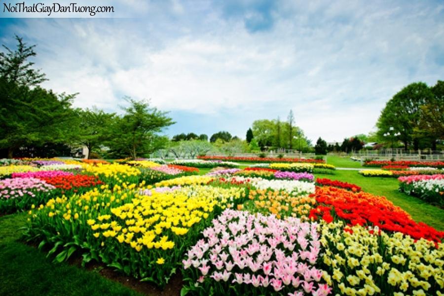 Tranh dán tường | những bông hoa xinh xắn trong công viên tuyệt đẹp DA2266