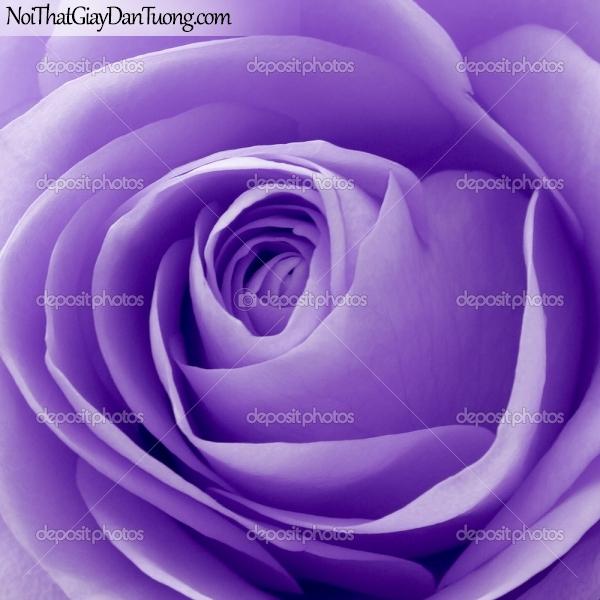 Tranh dán tường | Bức tranh hoa hồng tuyệt đẹp DA2280