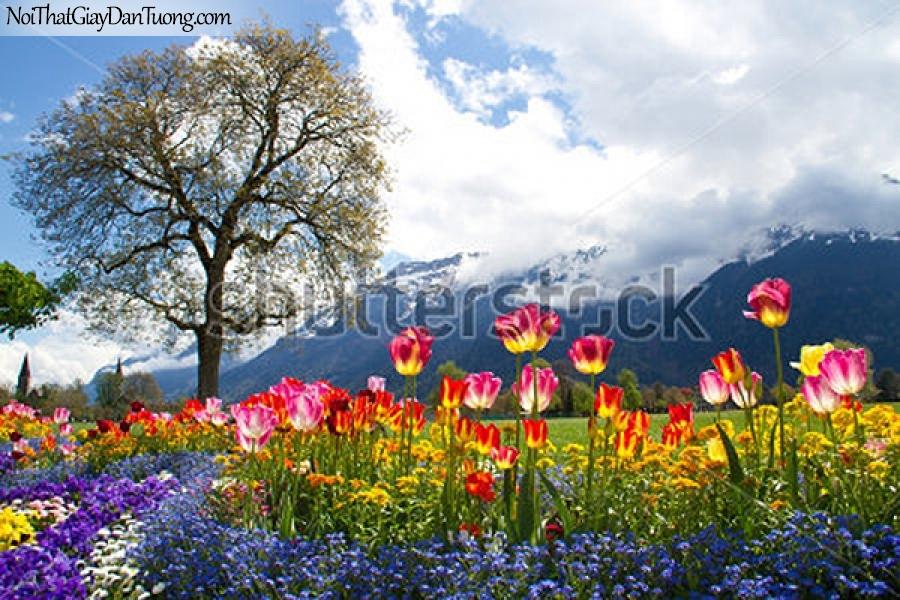 Tranh dán tường | Bức tranh những bông hoa đang khoe sắc trên thảo nguyên DA2282
