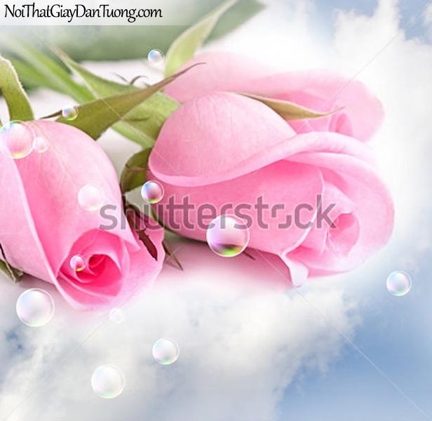 Tranh dán tường | những bông hoa hồng đang khoe sắc tuyệt đẹp DA2281