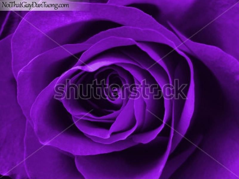 Tranh dán tường | Bức tranh bông hoa hồng tuyệt đẹp DA2340
