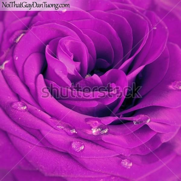 Tranh dán tường | Bức tranh bông hoa hồng tuyệt đẹp DA2352