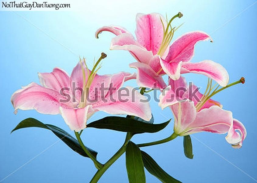 Tranh dán tường | Bức tranh bông hoa lan khoe sắc tuyệt đẹp DA2296