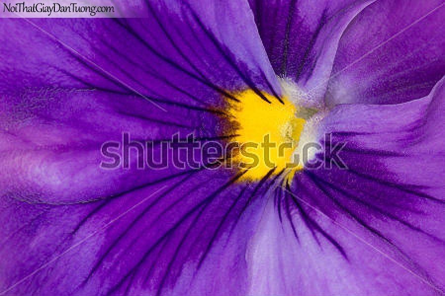 Tranh dán tường | Bức tranh bông hoa lan tuyệt đẹp DA2308