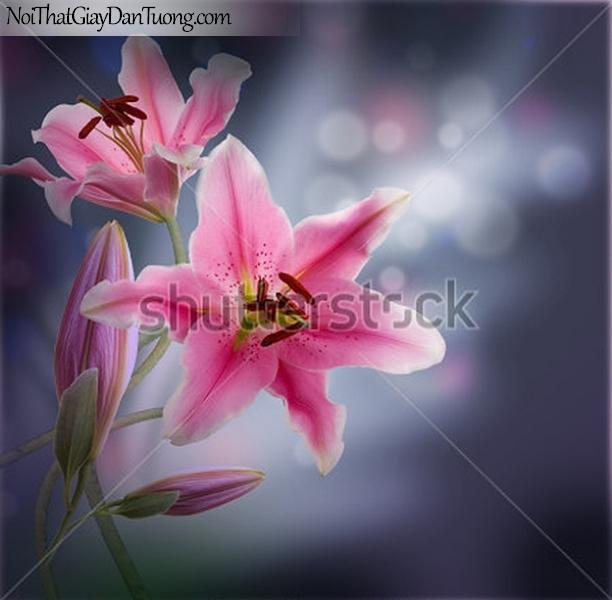 Tranh dán tường | Bức tranh bông hoa lan tuyệt đẹp DA2328