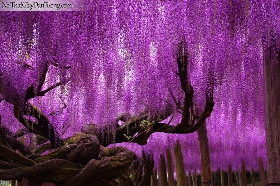 Tranh dán tường | Bức tranh cây cổ thụ nở những chành hoa đẹp DA2346