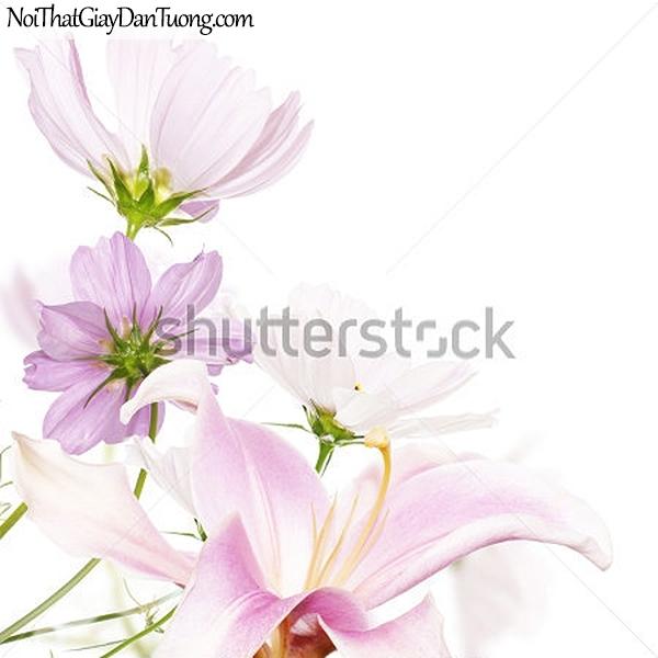 Tranh dán tường | Bức tranh những bông hoa đang khoe sắc DA2323