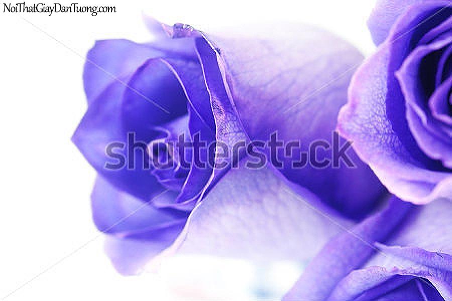 Tranh dán tường | Bức tranh những bông hoa hồng đang khoe sắc DA2320