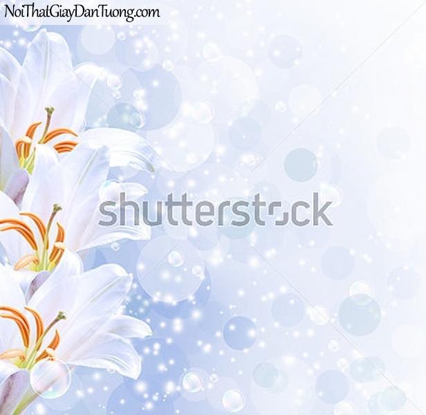 Tranh dán tường | Bức tranh những bông hoa lan đang khoe sắc cùng với những bong bóng nước DA2291