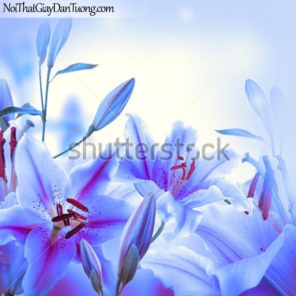 Tranh dán tường | Bức tranh những bông hoa lan đang khoe sắc DA2326