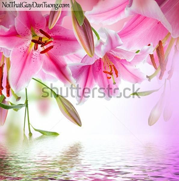 Tranh dán tường | Bức tranh những bông hoa lan đang khoe sắc trên mặt nước tuyệt đẹp DA2330