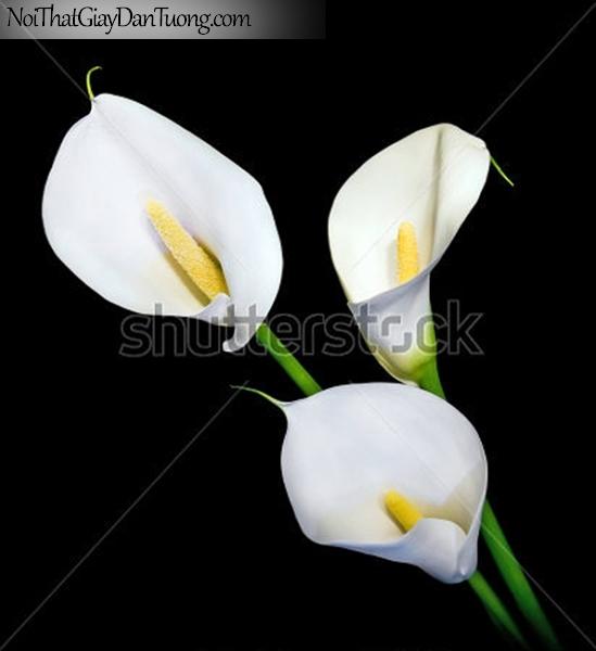 Tranh dán tường | Bức tranh những bông hoa lan khoe sắc tuyệt đẹp DA2295