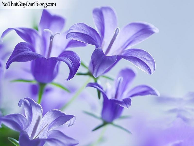 Tranh dán tường | Bức tranh những bông hoa lan tím khoe sắc tuyệt đẹp DA2299