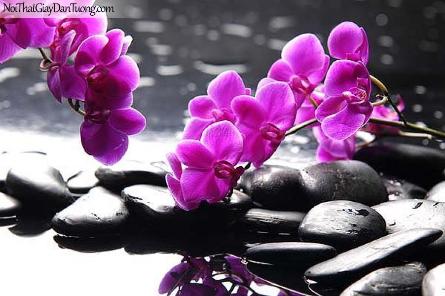 Tranh dán tường | Bức tranh những bông hoa lan trên những viên đá nhỏ xinh DA2348