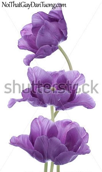 Tranh đán tường | Bức tranh những bông hoa tuyệt đẹp DA2303