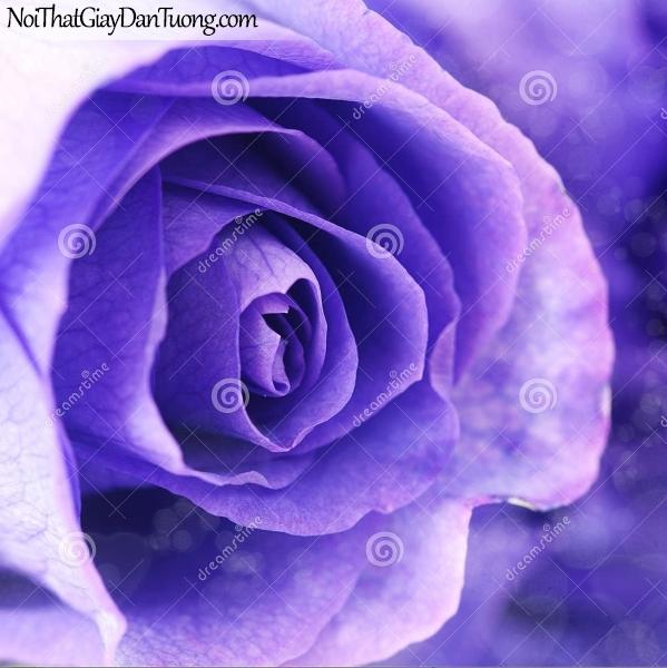 Tranh dán tường | Bức tranh vẻ đẹp độc đáo của bông hoa hồng DA2311