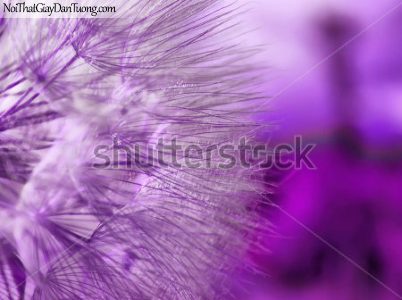 Tranh dán tường | Bức tranh vẻ đẹp độc đáo của những bông hoa DA2342