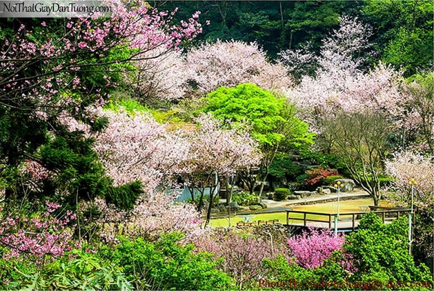Tranh dán tường | Bức tranh vườn hoa đào nở tuyệt đẹp trong khu rừng DA2304