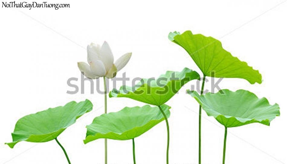 Tranh dán tường , ngắm bông hoa sen màu xanh xanh DA2343