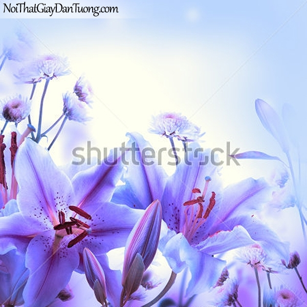 Tranh dán tường , ngắm những bồng hoa lan đẹp DA2329