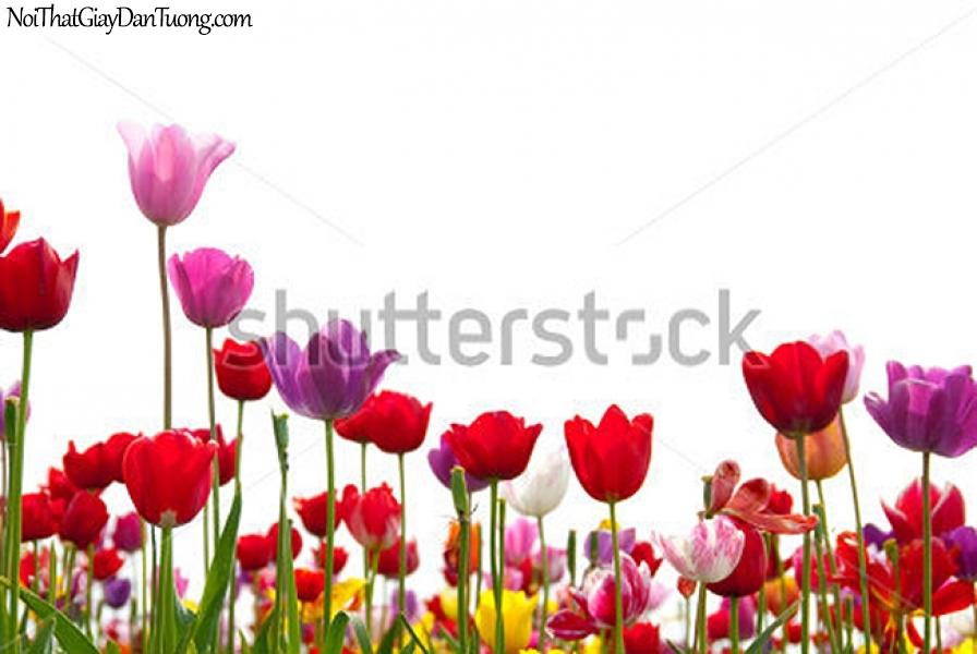Tranh dán tường , ngắm những bông nhiều màu sắc tuyệt đẹp DA2347
