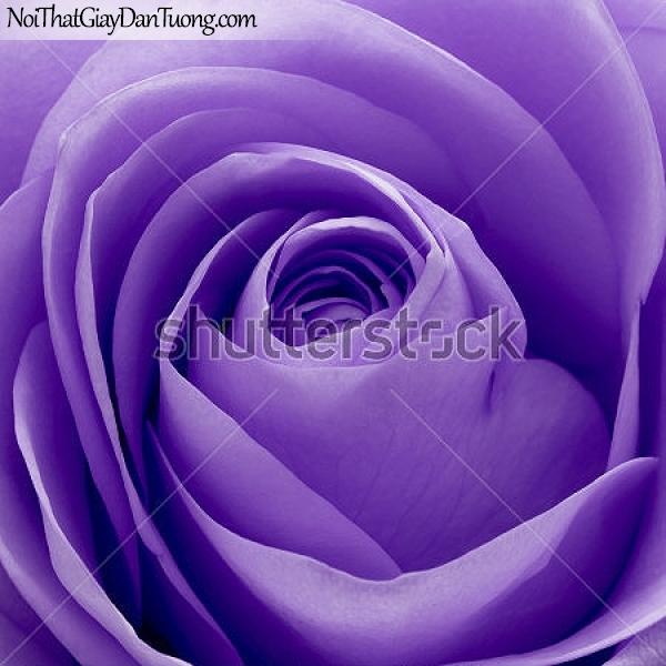 Tranh dán tường , bông hồng màu tím DA2353