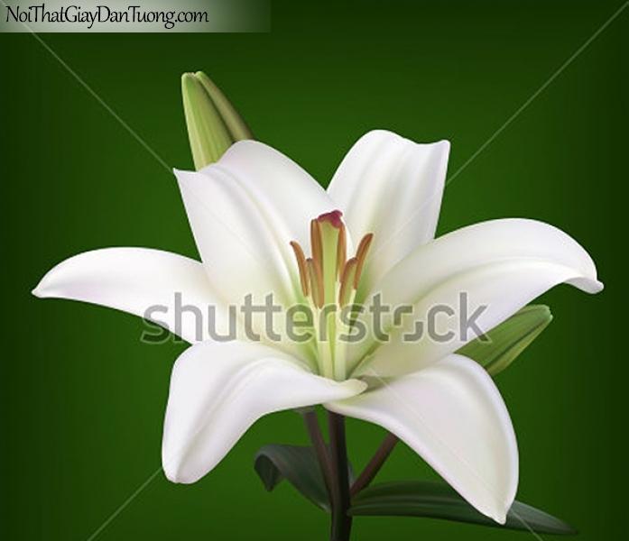 Tranh dán tường | Bức tranh bông hoa loa kèn trắng tuyệt đẹp DA2364