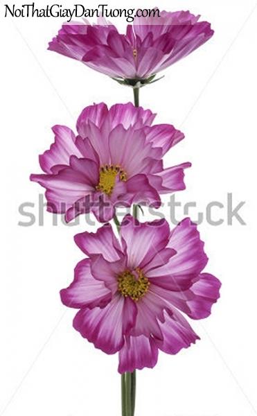 Tranh dán tường | Bức tranh những bông hoa đang khoe sắc DA2362