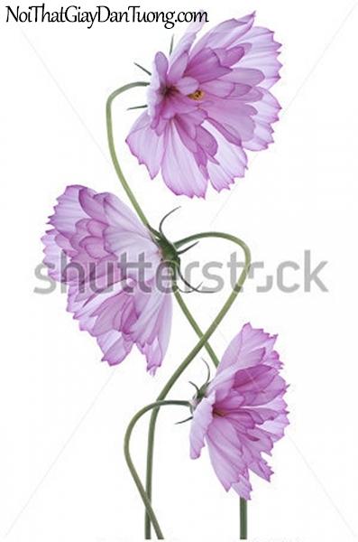 Tranh dán tường | Bức tranh những bông hoa đang khoe sắc DA2365