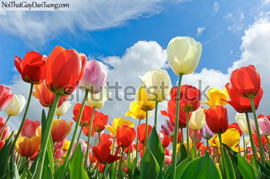 Tranh dán tường | Bức tranh những bông hoa khoe sắc dưới bầu trời xanh DA2358