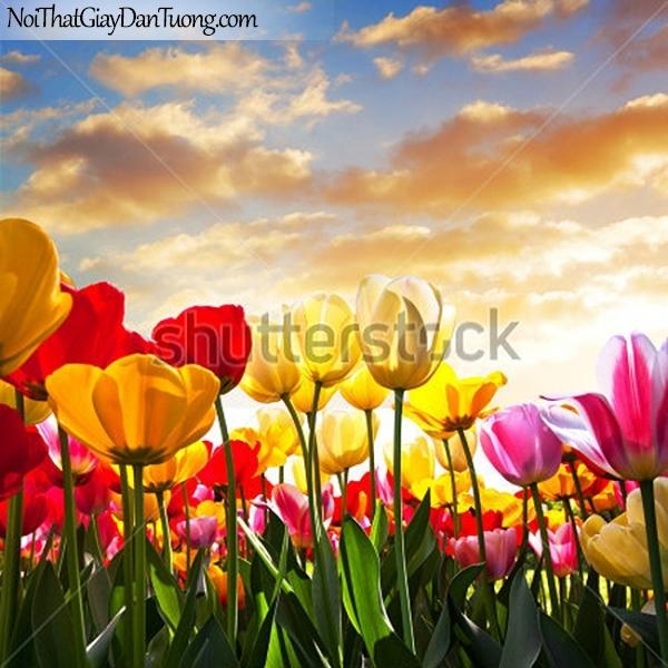 Tranh dán tường | Bức tranh những bông hoa nhiều màu khoe sắc dưới bầu trời DA2366
