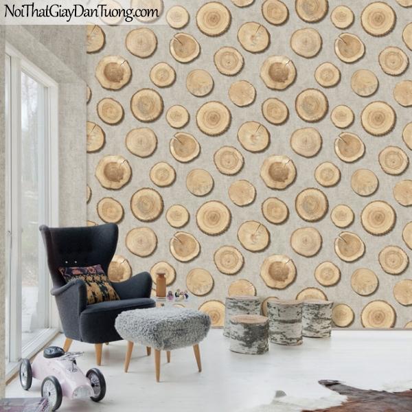 Giấy dán tường giả gỗ, những miếng gỗ trên nền giấy giả gỗ, màu vàng đất 2642-2 vs 2641-2 gp PC