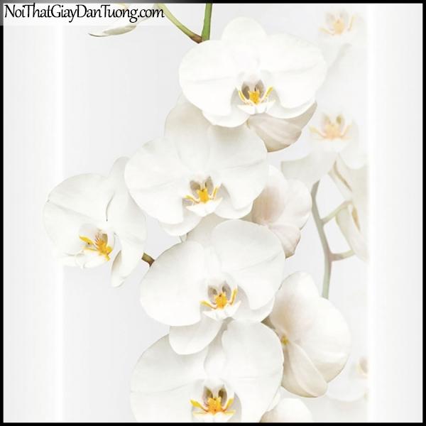 PLENUS, Giấy dán tường Hàn Quốc 2624-1, Giấy dán tường 3D hoa văn, hoa lan trắng đẹp