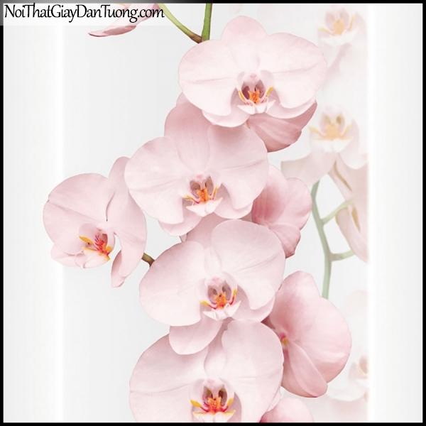PLENUS, Giấy dán tường Hàn Quốc 2624-2, Giấy dán tường 3D hoa văn, hoa lan hồng đẹp