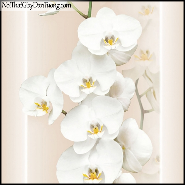 PLENUS, Giấy dán tường Hàn Quốc 2624-3, Giấy dán tường 3D hoa văn, hoa lan trắng đẹp