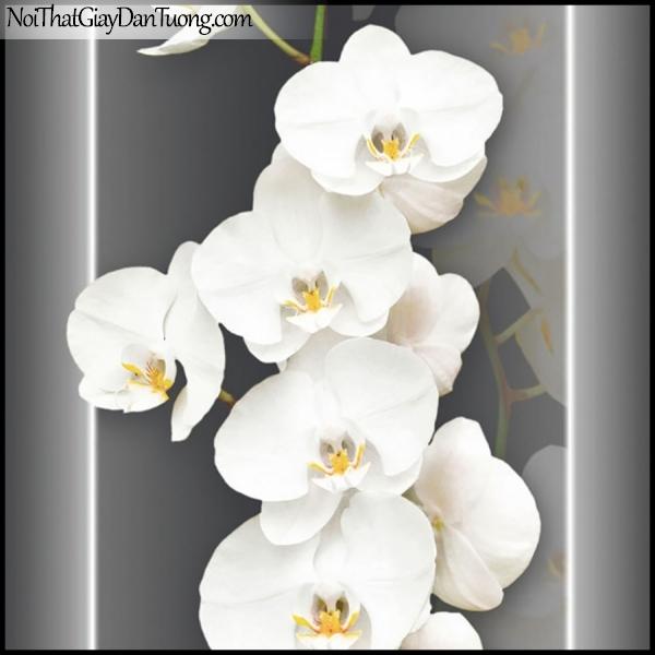 PLENUS, Giấy dán tường Hàn Quốc 2624-4, Giấy dán tường 3D hoa văn, hoa lan trắng đẹp