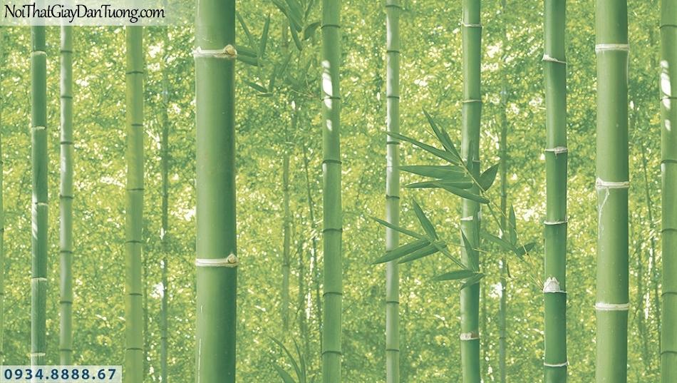 Assemble | Giấy dán tường hình cây tre, bụi tre, lùm tre xanh | Giấy dán tường Assemble 40112-1