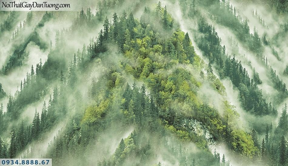 Assemble | Giấy dán tường khu rừng, núi nhìn từ trên cao xuống, sướng bình mình sương trên cây| Giấy dán tường Assemble 40113-1