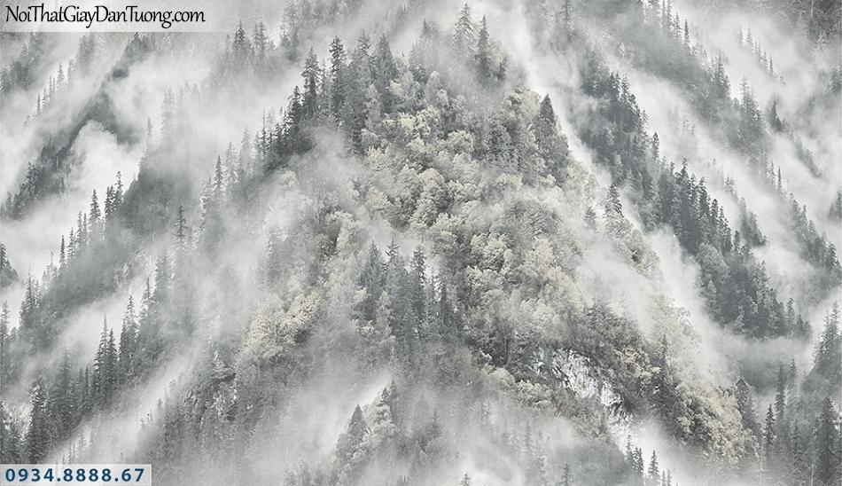 Assemble | Giấy dán tường rừng núi cao, sương sớm phủ trên cây, sường núi nhìn từ trên cao | Giấy dán tường Assemble 40113-3